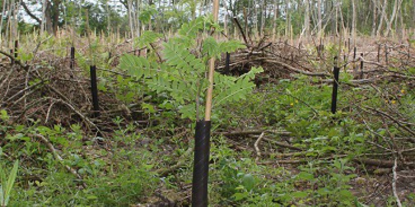 Drumaheglis new woodland