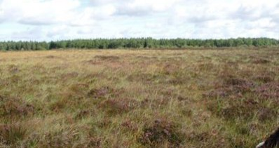 Bogs Of Ballymoney