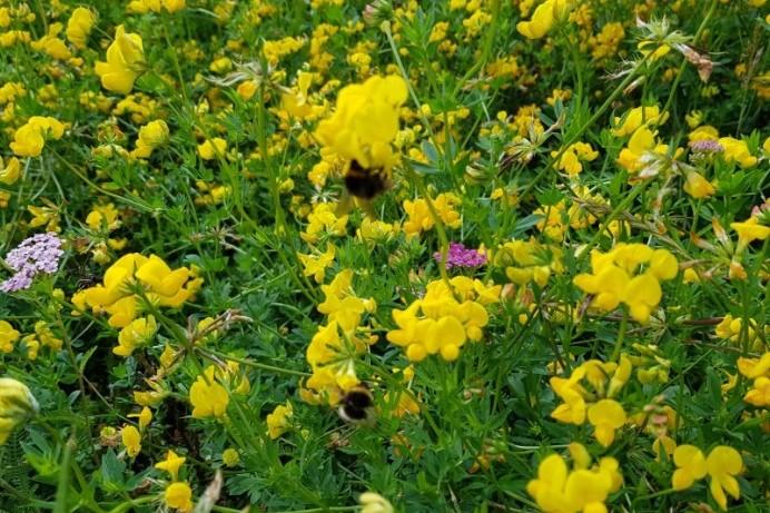 Wildflowers help nature bloom across the Borough