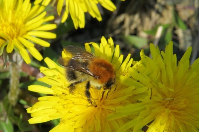 All-Ireland Pollinator Plan praise for Don't Mow Let It Grow